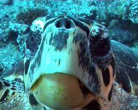 vakaru_turtle01